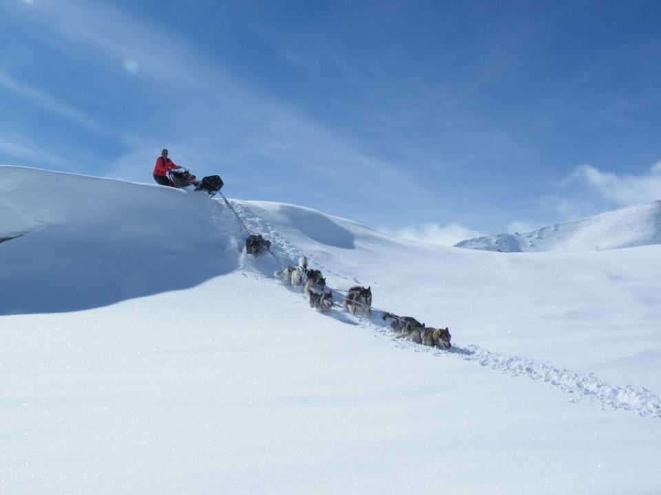 Alpi Traineau Balade en chien de traineau Orcières Merlette 1850