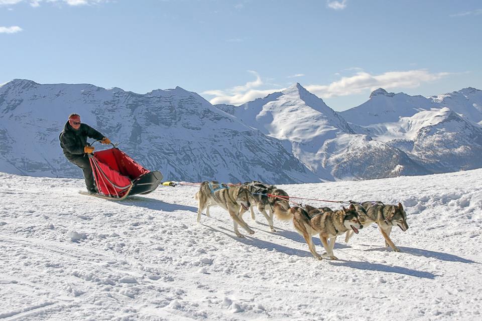 Conduite d'attelage Musher Alpi Traineau Orcieres Merlette 1850 Champsaur Hautes Alpes Alpi Traineau Chiens de traineaux