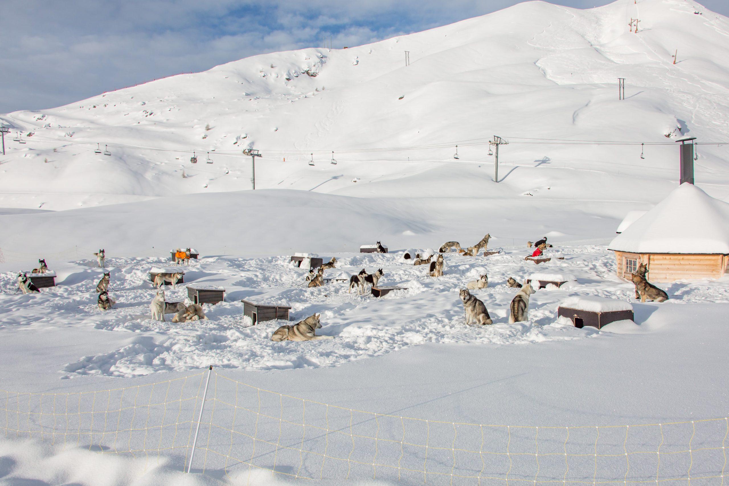 Village de Williwaw Alpi Traineau Orcieres Merlette 1850 Champsaur Hautes Alpes Alpi Traineau Chiens de traineaux