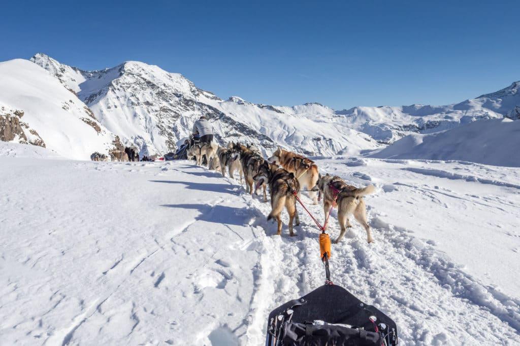 Conduite d'attelage Alpi Traineau Orcieres Merlette 1850 Champsaur Hautes Alpes Alpi Traineau Chiens de traineaux